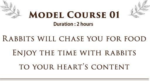 Model Course 01 RABBITS WILL CHASE YOU FOR FOOD ENJOY THE TIME WITH RABBITS TO YOUR HEART'S CONTENT
