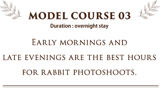 MODEL COURSE 03 EARLY MORNINGS AND LATE EVENINGS ARE THE BEST HOURS FOR RABBIT PHOTOSHOOTS.